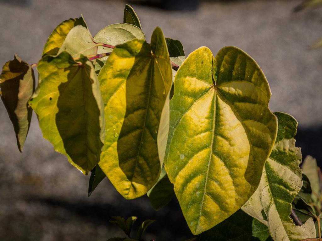 Tristes feuilles d'automne... 44242114135_40c4fa4424_b
