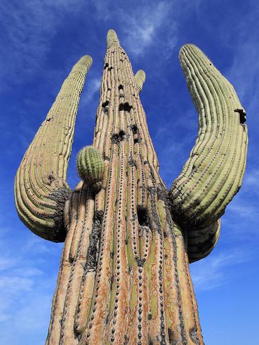 canon eos 6d 6 d canoneos6d canonef1635f4lisusm ef 1635 f4l f4 l is usm voyage travel travelling reise vacation urlaub usa us united states america vereinigte staaten von amerika american southwest amerikanischer südwesten arizona saguaro national park np nationalpark tucson mountain district west bajada loop drive valley view trail cactus kaktus kaktee hike hiking wanderung wandern randonnée randonnee desert wüste spring frühling az