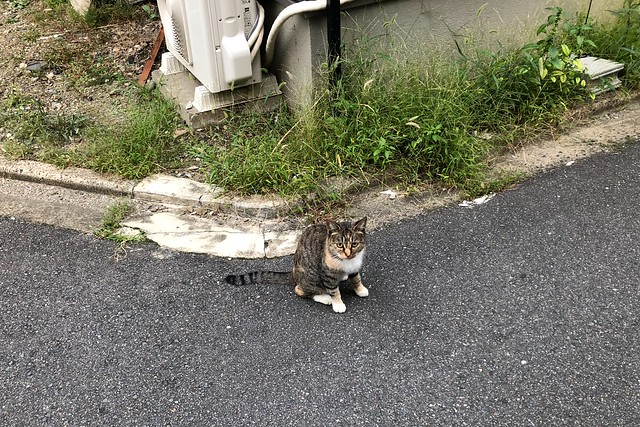 Today's Cat@2018-10-10