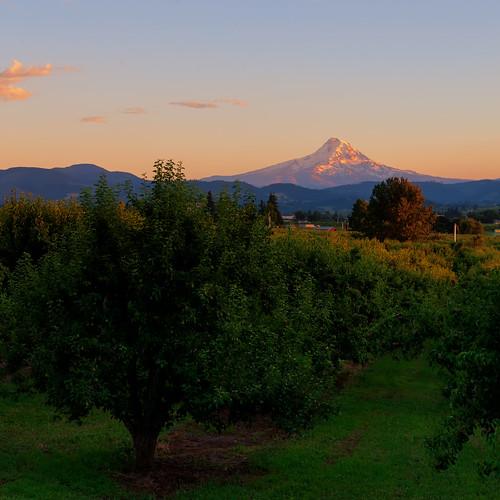 mthood cascademountains snowcappedmountains oregon orchard farm rural summer sunrise morning color sky pastel