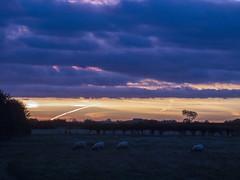 Dawn sky Paull Rd field