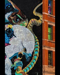 Uptown Mural . . Part of the Audobon Mural Project . . #birdart #broadway #audobonmuralproject #nationalaudobonsociety #streetart #commisionedartwork #upperwestside #uptownmanhattan #muralart #chrislord #chrislorddotnyc #pixielatedpixels #nycphotographer