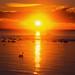 Altona sunrise across the bay by benjensz