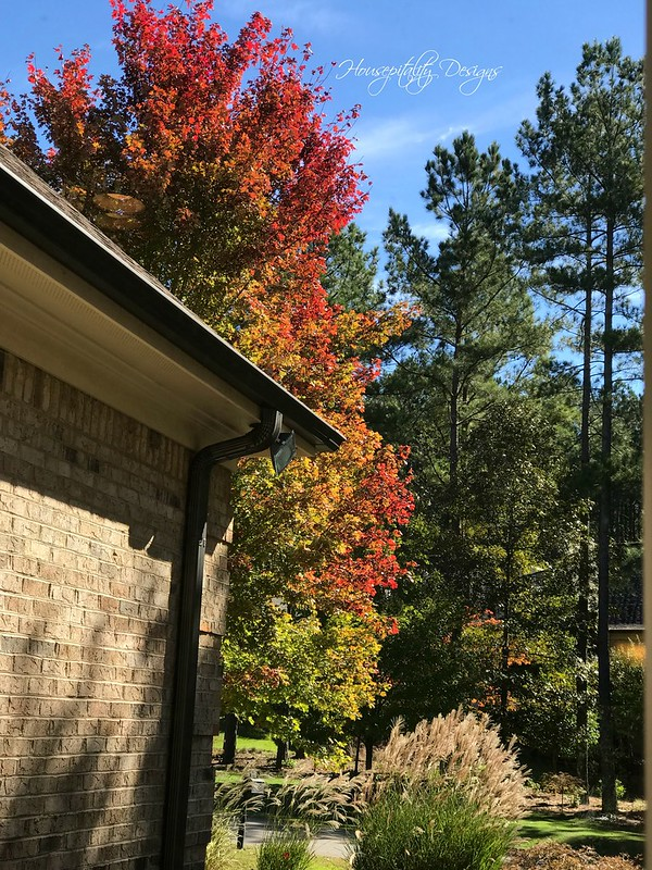 Fall Window View-Housepitality Designs