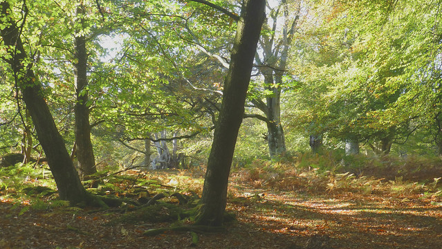 New Forest NP, Hampshire, Panasonic DMC-TZ30