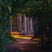 Fairytale Forest by Galerie-EF