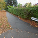 Leaves on the lawn - Selly Oak Road, Bournville