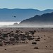 Sossusvlei, Namibia by Steve Segall (aka seagully)