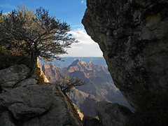 Crevasse with a twisted tree at the North Rim of Grand Canyon, Arizona, USA