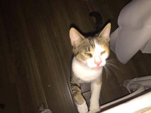 Be Live Marien Puerto Plata - Restaurantkatze / Restaurant cat