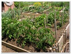 community gardens_5217