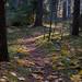 Hösten i Tystberga