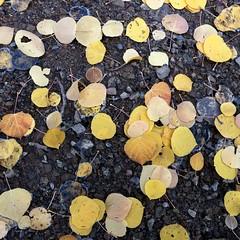 Fall. <3