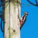 Pole dancer...