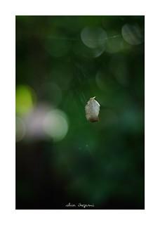 2018/9/22 - 17/24 photo by shin ikegami. - SONY ILCE‑7M2 / Carl Zeiss C Sonnar T* 1.5/50 ZM