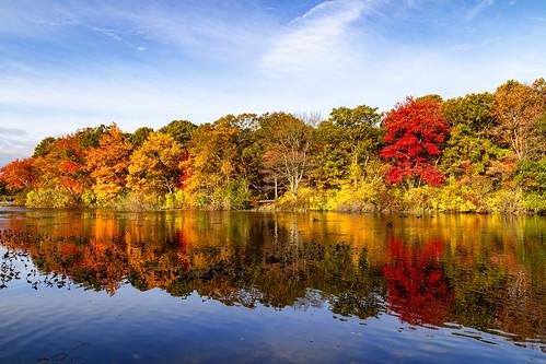 autumn massapequapreserve longisland newyork morning landscape fallcolor foliage reflection rpg90901 woods sky pond trees fall water canon 6d canonef24105mmf4lisusm massapequa nassaucounty 2015 october 0851 ooutdoor fallfoliage park