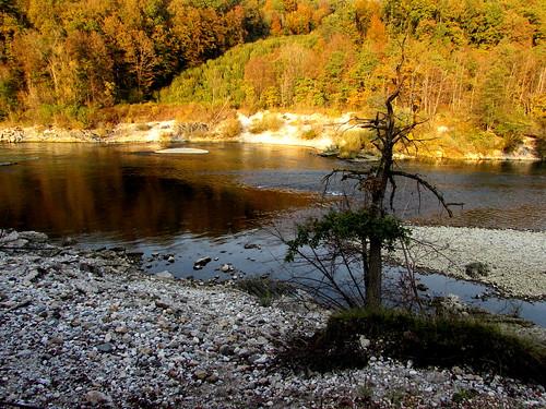slovenia sava ljubljana tree autumn river erosion ecology