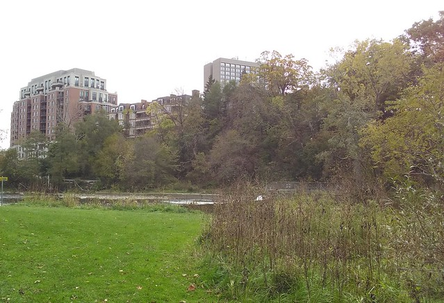 Condos by the water #toronto #etiennebrulepark #humberriver #fall #autumn #path #green #condos #latergram