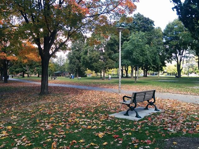 In Dufferin Grove Park (8) #toronto #dufferingrove #dufferingrovepark #parks #fall #autumn #latergram