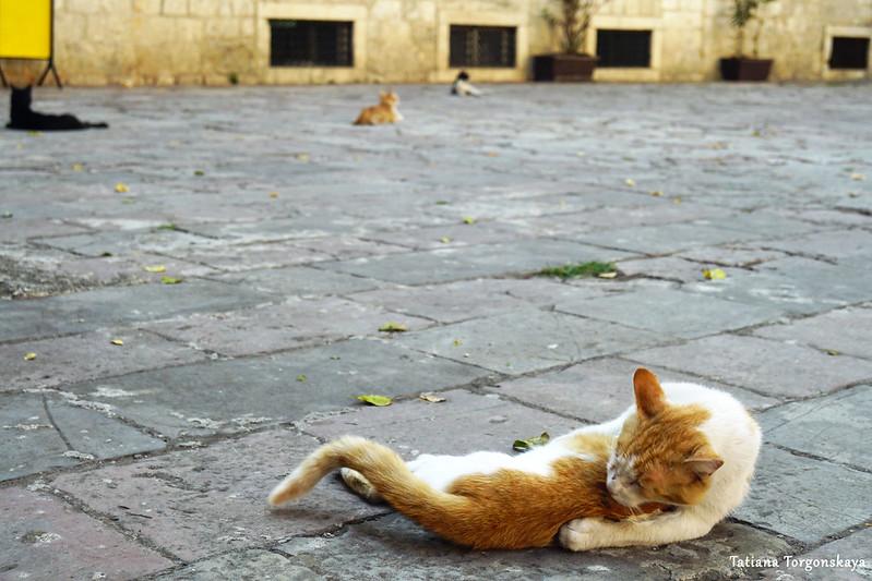Коты возле Музея кошек