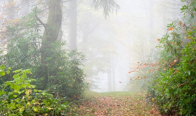 Autumn mist, Pant-du woodland, Fujifilm X-T2, XF60mmF2.4 R Macro