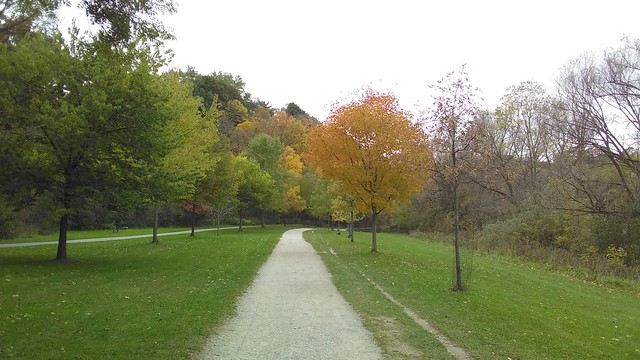 Straight path #toronto #homesmithpark #humberriver #fall #autumn #path #green #red #orange #yellow #latergram