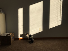Patches sunbeams
