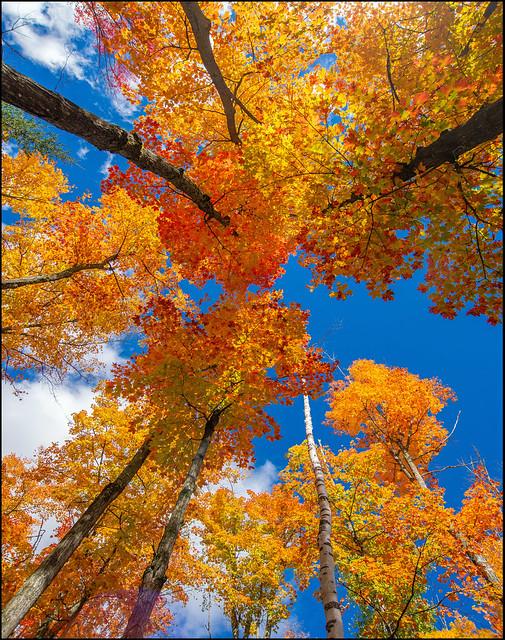 Canopy Of Colour, Nikon D600, AF Zoom-Nikkor 18-35mm f/3.5-4.5D IF-ED
