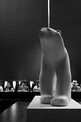 bear at the bar