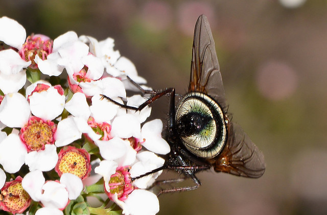The Dramatic End of a Blowfly