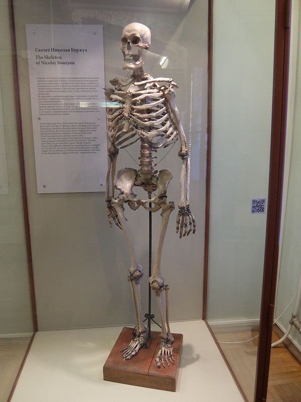 Санкт-Петербург - Кунсткамера - Скелет Николая Буржуа