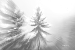 Tree - Lens zoom 7451