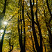 251018_Buckland Wood L_1544.jpg