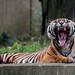 National Zoo by angela n.