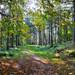 Polney Woods