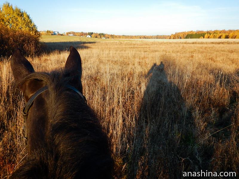 Поле около конюшни, Московская область