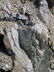 Subisoclinal fold in gneiss (Archean; Norris South roadcut, Madison County, Montana, USA) 5