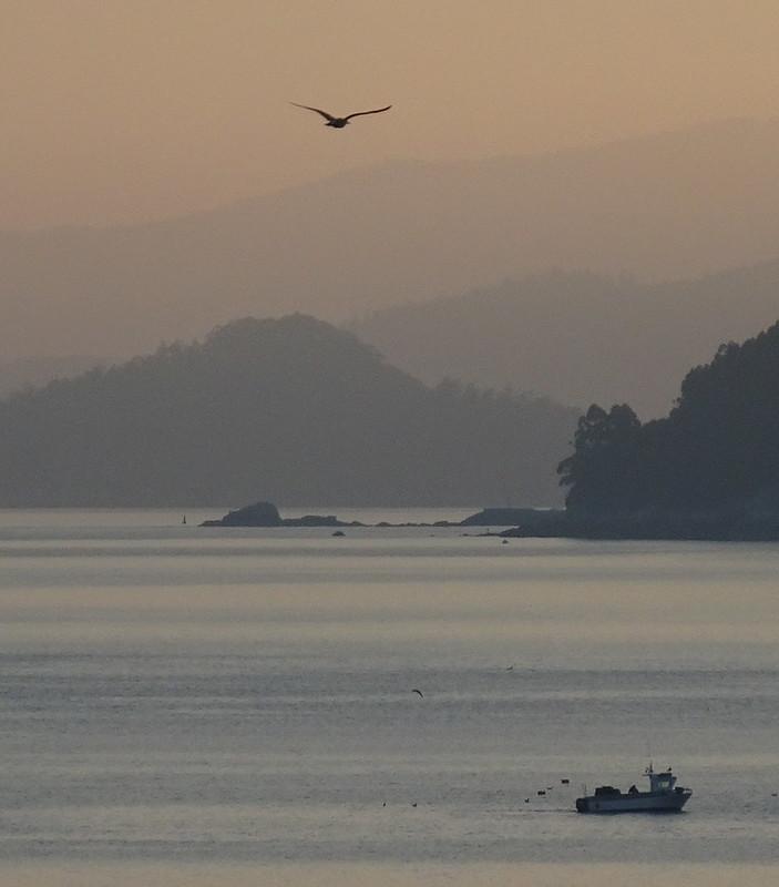 Bird and Boat at Dawn