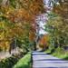 The Snaigow Road