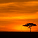 Mara North Conservancy at sunrise time by Svitlana Tkach