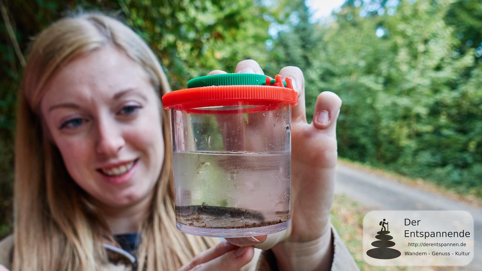 Ein Salamander-Molch