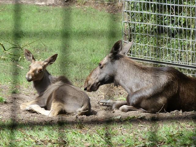 Elche, Tierpark Neumünster