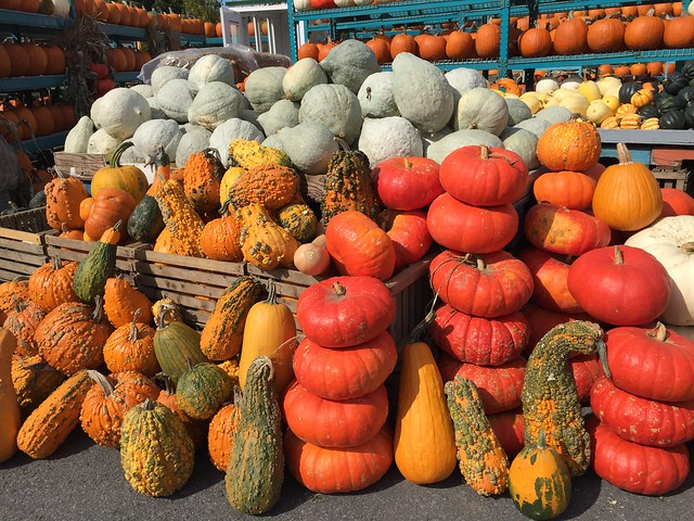 Piles of Pumpkins