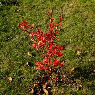 Jesień - Autumn DSCF8593.jpg silky