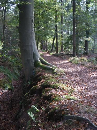 Vegelin woods, St Nic