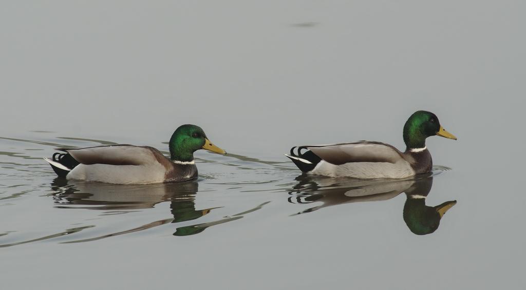 Sortie Réserve Ornithologique du Teich - 21 octobre 2018 - Page 3 43787851560_e1edb4144a_o