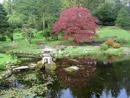 Acer at Japanese Garden, Cowden