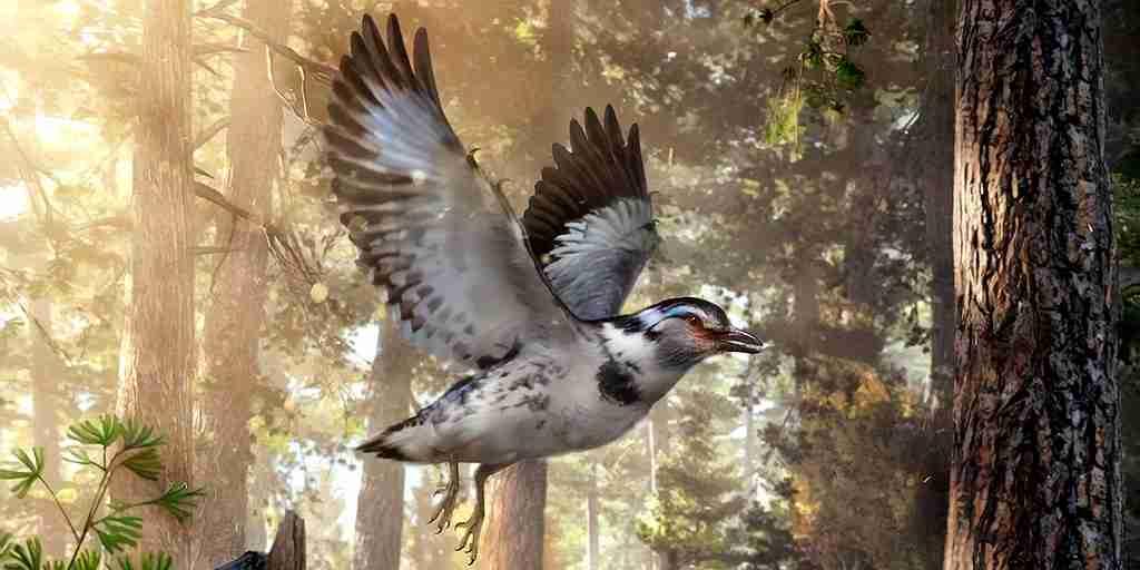 oiseau-dinosaure-évolution