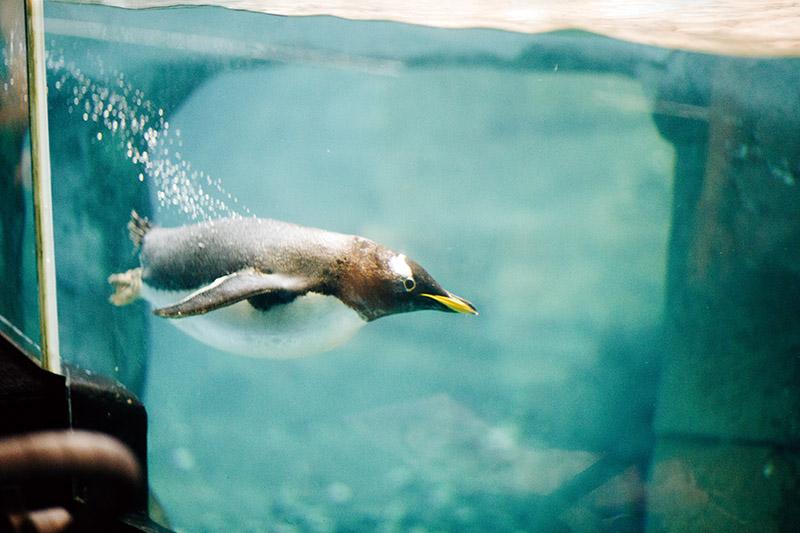 selwo-marina-benalmadena-penguin-1