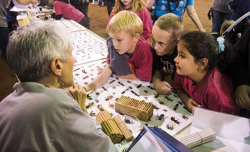 Insect Fest 2018